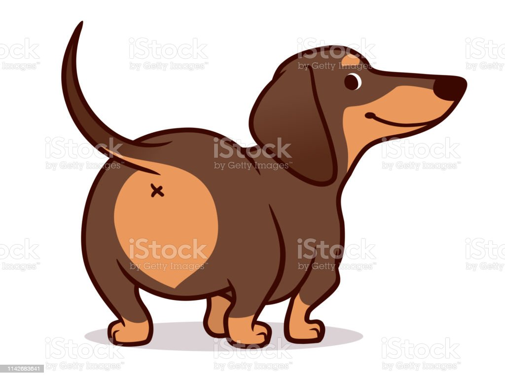 Cute Wiener Sausage Dog Vector Cartoon Illustration Isolated On