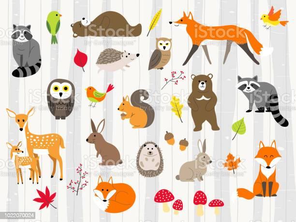 Cute wild animals cartoon set vector id1022070024?b=1&k=6&m=1022070024&s=612x612&h=7gczrp0q  nzb3rp dg5awjubefmbqr7egddfr8t94a=