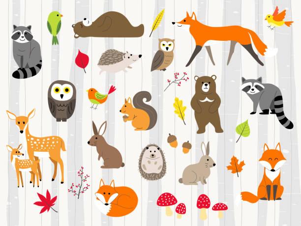 cute wild animals cartoon set woodland animals illustration,autumn forest woodland stock illustrations