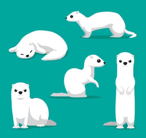 Cute Winter Coat Weasel Cartoon Vector Illustration Animal Characters EPS10 File Format ermine stock illustrations