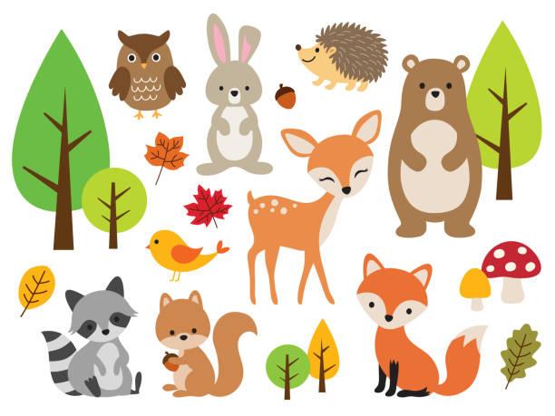 Cute Woodland Forest Animal Vector Illustration Set Vector illustration of cute woodland forest animals including deer, rabbit, hedgehog, bear, fox, raccoon, bird, owl, and squirrel. woodland stock illustrations