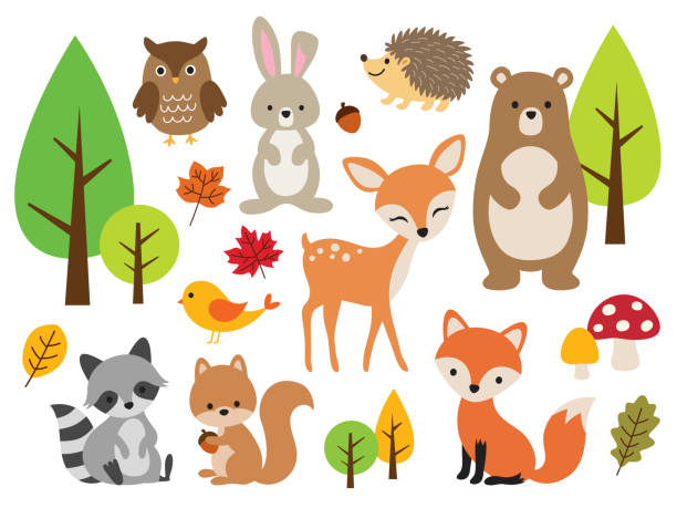 cute woodland forest animal vector illustration set - animals stock illustrations