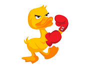 Cute Yellow Boxing Duck Character Illustration In Isolated White Background