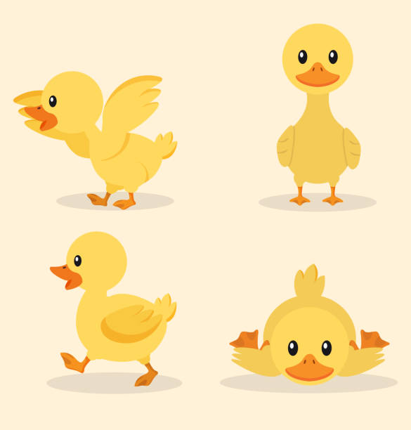 Cute yellow duck collection set Cute yellow duck collection set duckling stock illustrations