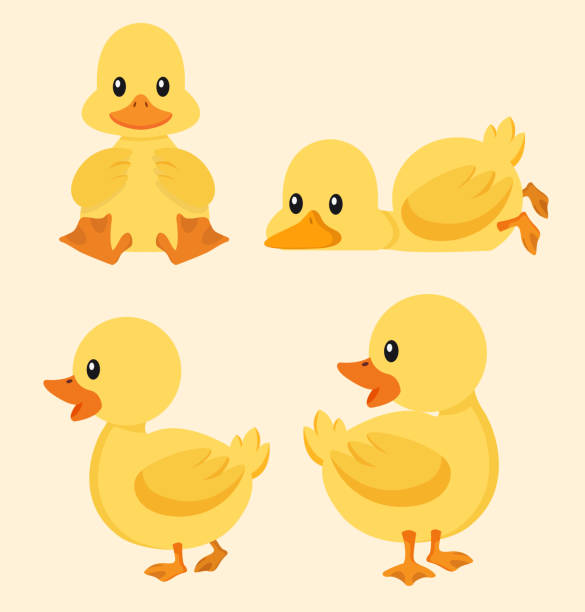 Cute yellow duck set Vector illustration, Flat and minimal vector eps file With Copy Space Flat Vector Illustration duck bird stock illustrations