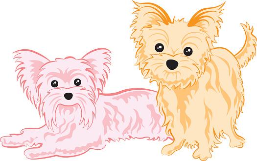 Cute yorkshire terriers
