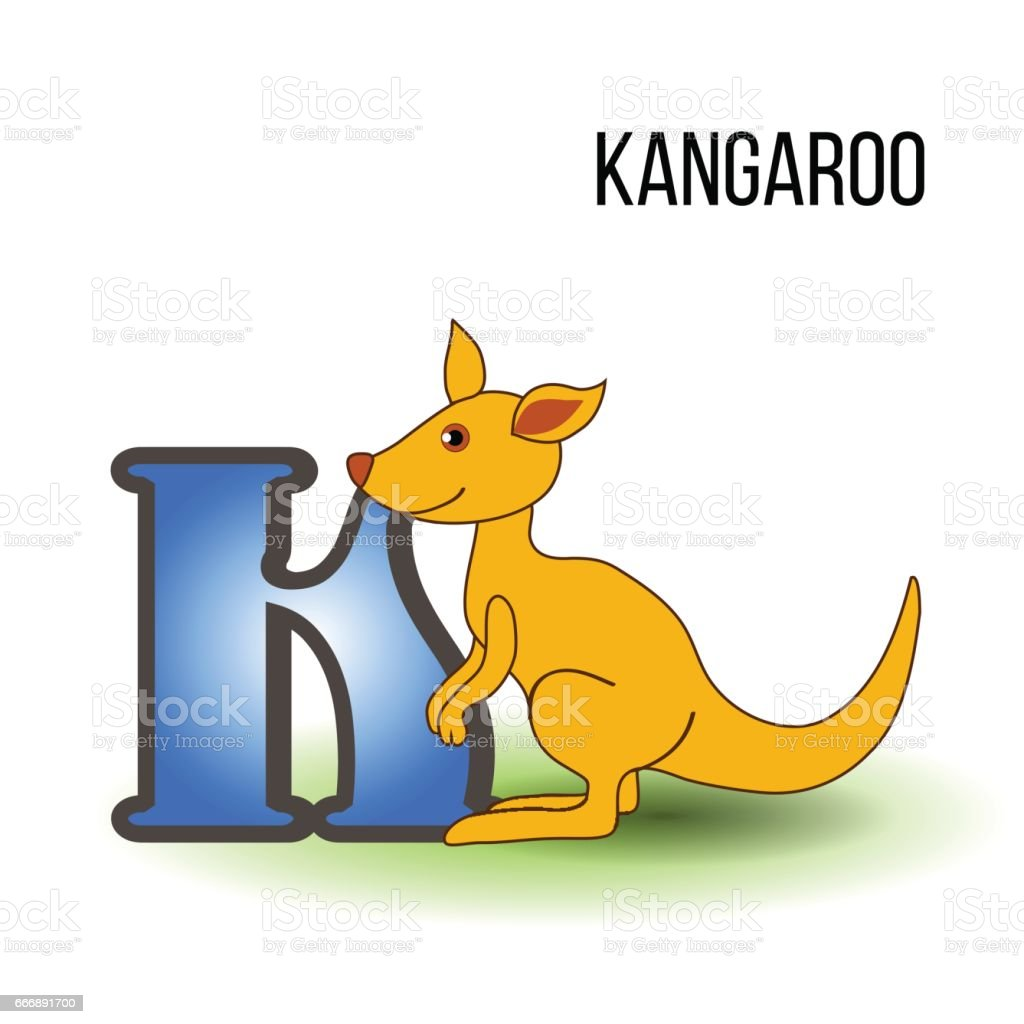 cute zoo alphabet k with cartoon kangaroo wild kid animal vector illustration cat isolated on