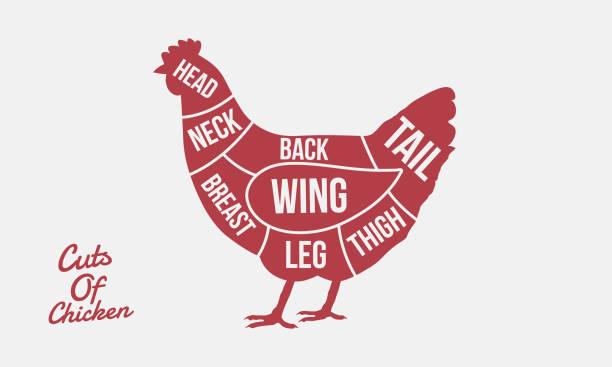 bildbanksillustrationer, clip art samt tecknat material och ikoner med styckningsdelar av kyckling. köttet skär. kyckling siluett isolerad på vit bakgrund. vintage affisch för slakteributiken. - fjäderfä