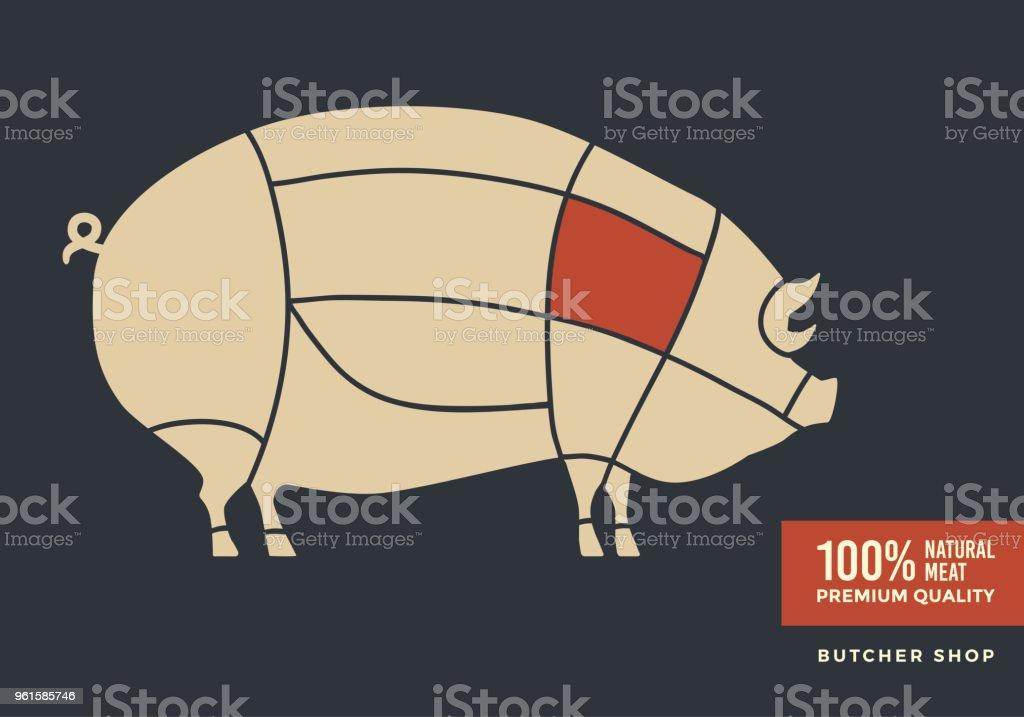 Moderno Fetal Disección Cerdo Anatomía Externa Imagen - Imágenes de ...