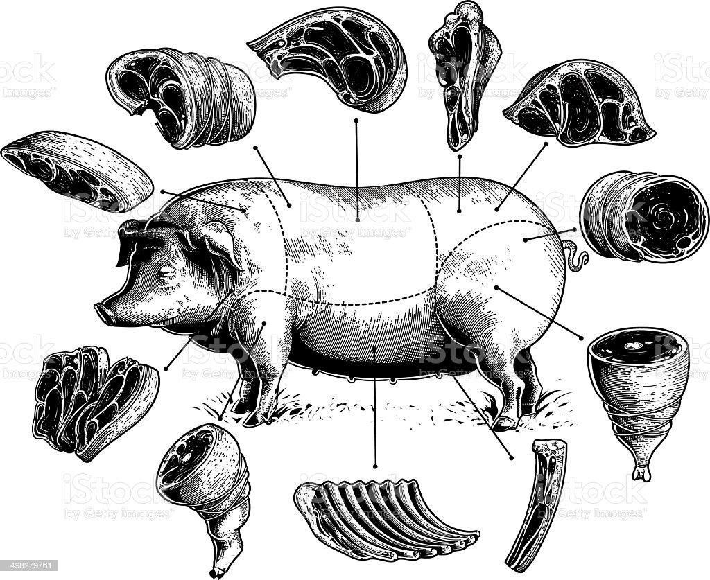 カットの豚 ベクターアートイラスト