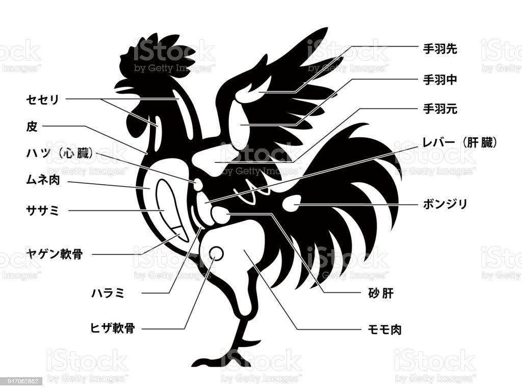 Ilustración de Guía De Diagrama De Corte Pollo y más banco de ...