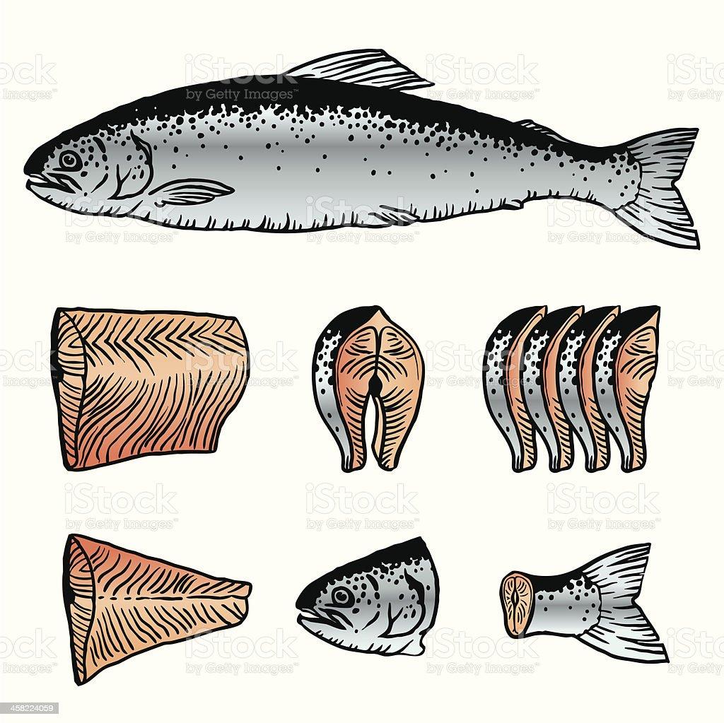 Cutting Fish. Salmon vector art illustration