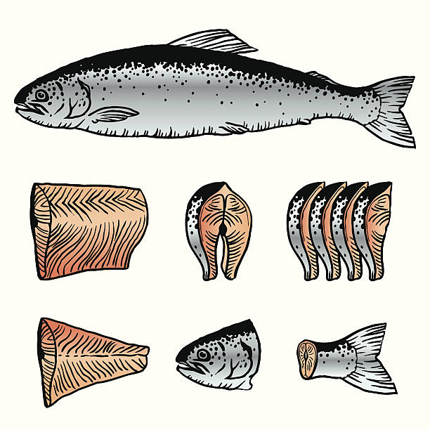 cutting fish. salmon - redfish stock illustrations, clip art, cartoons, & icons