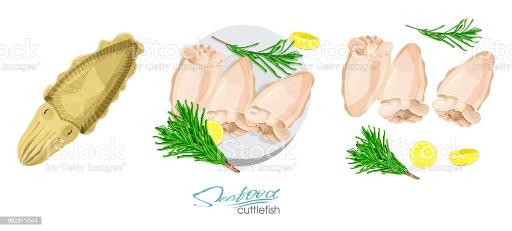 Cuttlefish seafood isolated sketch. Illustration of a dish of cuttlefish with lemon and rosemary on a plate. Cuttlefish cooked. Cuttlefish, lemon, rosemary separately on a white background. - arte vettoriale royalty-free di Acqua