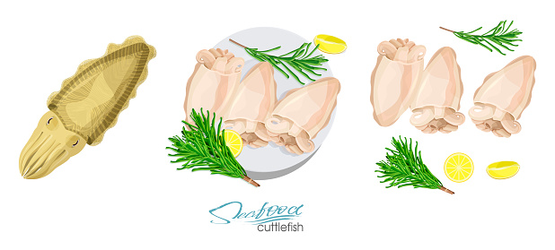 Cuttlefish Seafood Isolated Sketch Illustration Of A Dish Of Cuttlefish With Lemon And Rosemary On A Plate Cuttlefish Cooked Cuttlefish Lemon Rosemary Separately On A White Background - Immagini vettoriali stock e altre immagini di Acqua