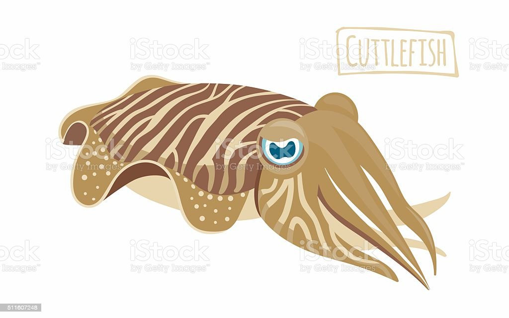 royalty free cuttlefish clip art  vector images octopus vector download octopus vector illustration