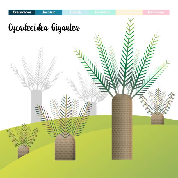 cycadeoidea gigantea - fossilized leaves stock illustrations