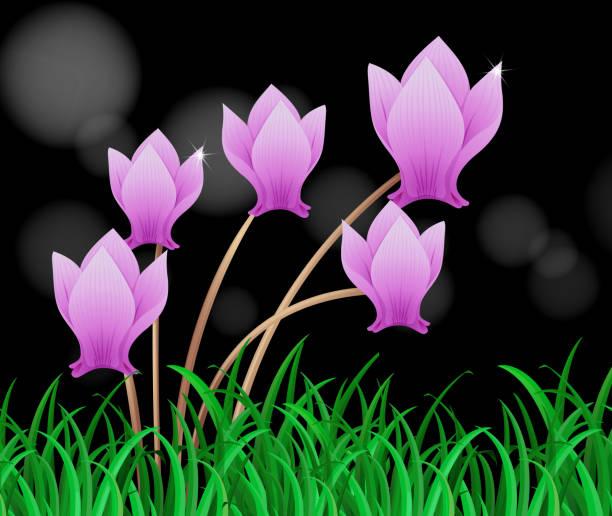 alpenveilchen-blume in lila farbe - alpenveilchen stock-grafiken, -clipart, -cartoons und -symbole