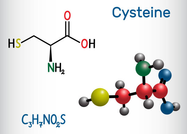 Cysteine  (L-cysteine, Cys, C) proteinogenic amino acid molecule.  Structural chemical formula and molecule model Cysteine  (L-cysteine, Cys, C) proteinogenic amino acid molecule.  Structural chemical formula and molecule model. Vector illustration amino acid stock illustrations