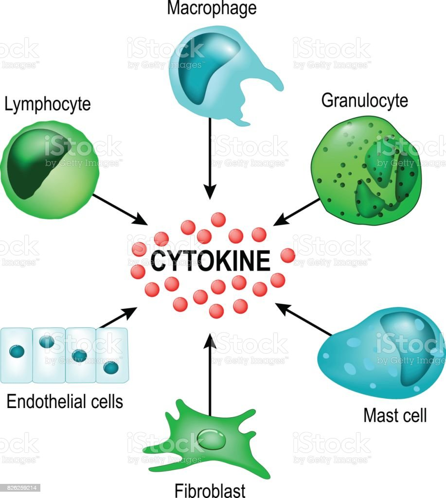 Cytokines vector art illustration