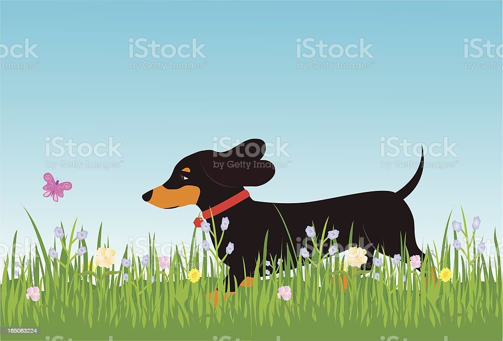 Dachshund and Butterfly vector art illustration