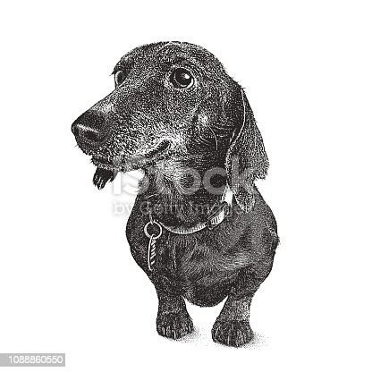 Stipple illustration of a Dachshund Dog in animal shelter hoping to be adopted
