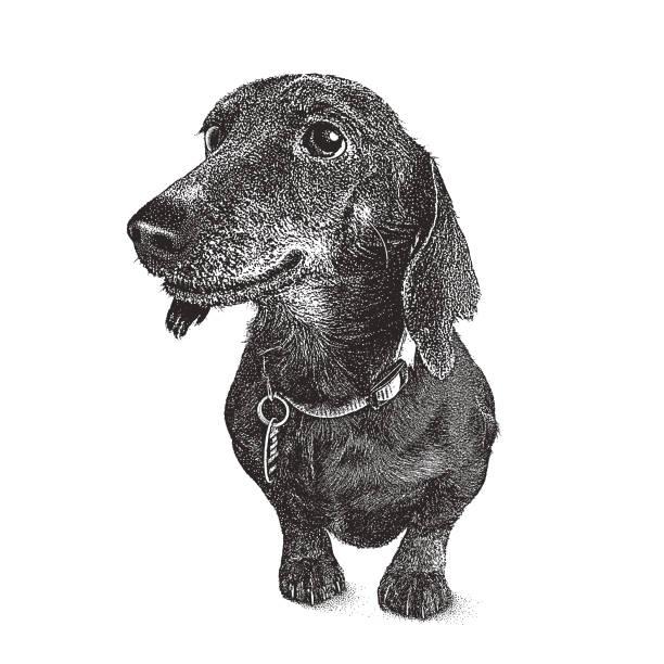 bildbanksillustrationer, clip art samt tecknat material och ikoner med tax hund i djurhemmet hoppas antas - tax