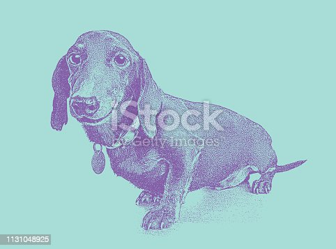 Stipple vector of a Dachshund Dog in animal shelter hoping to be adopted