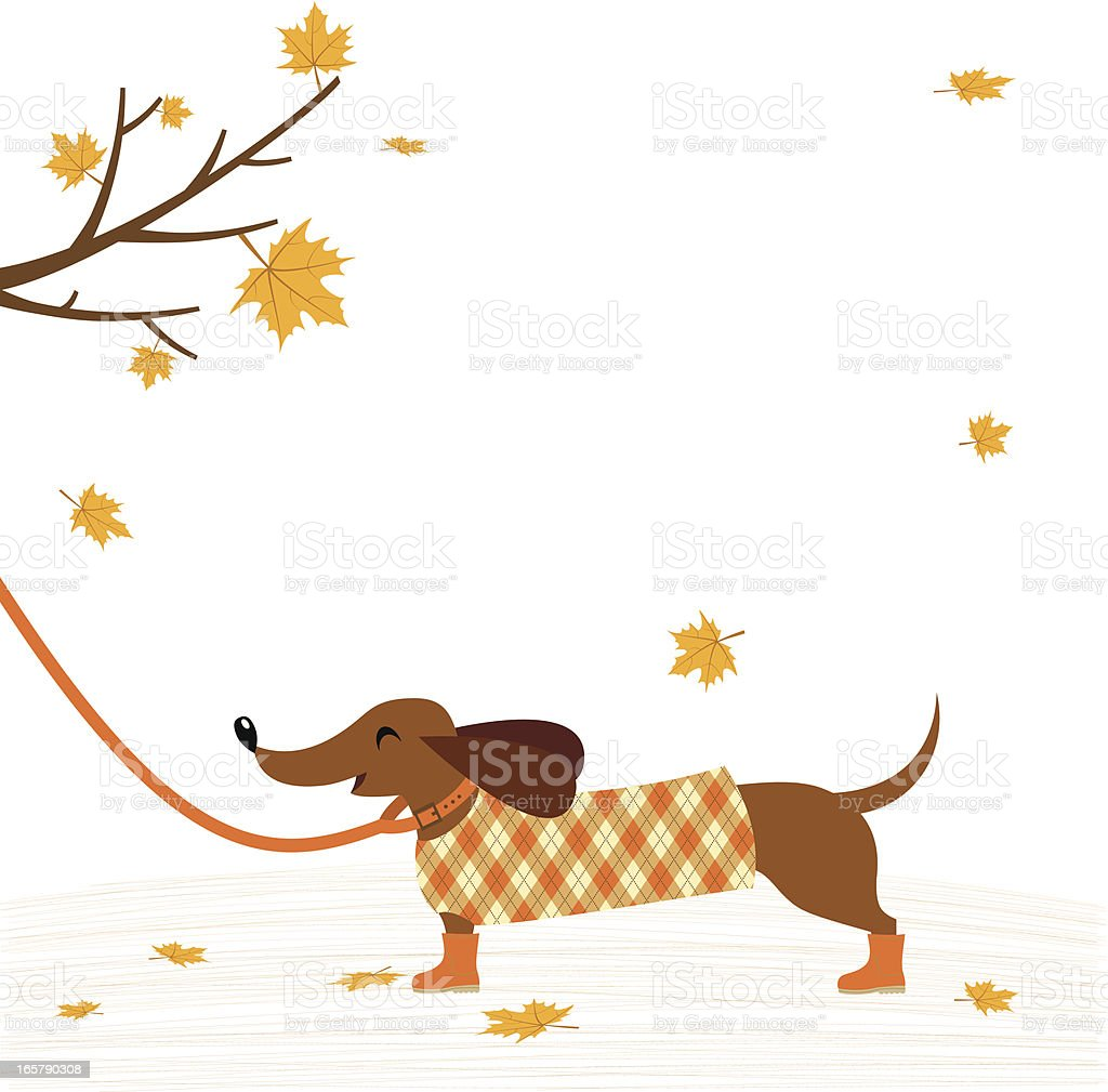 Dachshund dog in coat royalty-free stock vector art