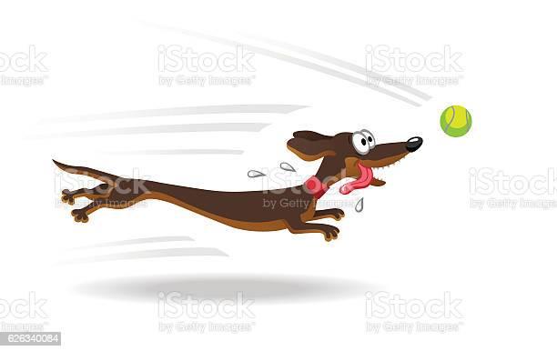 Dachshund dog running for tennis ball vector id626340084?b=1&k=6&m=626340084&s=612x612&h=axvz7bovdi4nowbuvbofpgmkx8qci lgnevibeljjok=