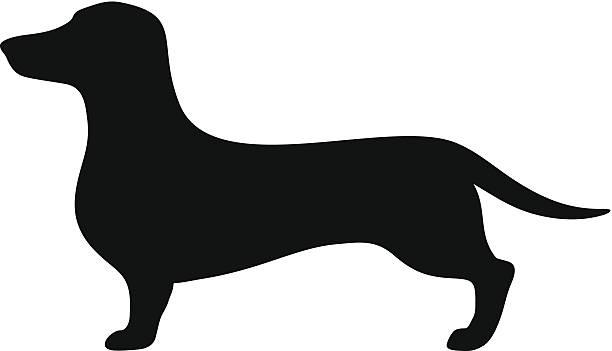 bildbanksillustrationer, clip art samt tecknat material och ikoner med dachshund dog. vector black silhouette. - tax