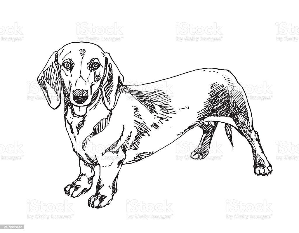 Ilustración de Perro Perro Salchicha Vector De De y más banco de ...