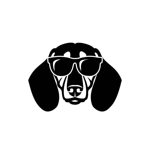 bildbanksillustrationer, clip art samt tecknat material och ikoner med dachshund hund bär sol glasögon-isolerad vektor illustration - tax