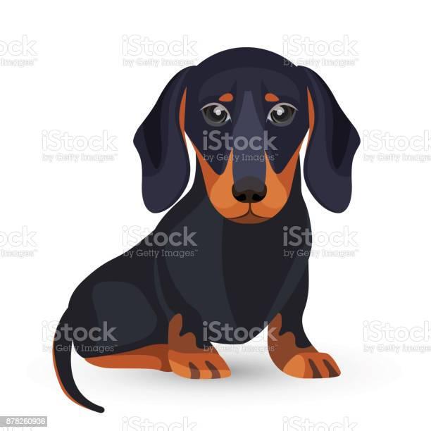 Dachshund dog with black fur in various positions vector id878260936?b=1&k=6&m=878260936&s=612x612&h=oqpthyyhsjboekec1khtrh1lige6dqtwygzf t0cipa=