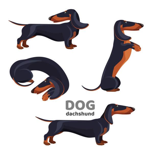bildbanksillustrationer, clip art samt tecknat material och ikoner med tax hund med svart päls i olika positioner - tax