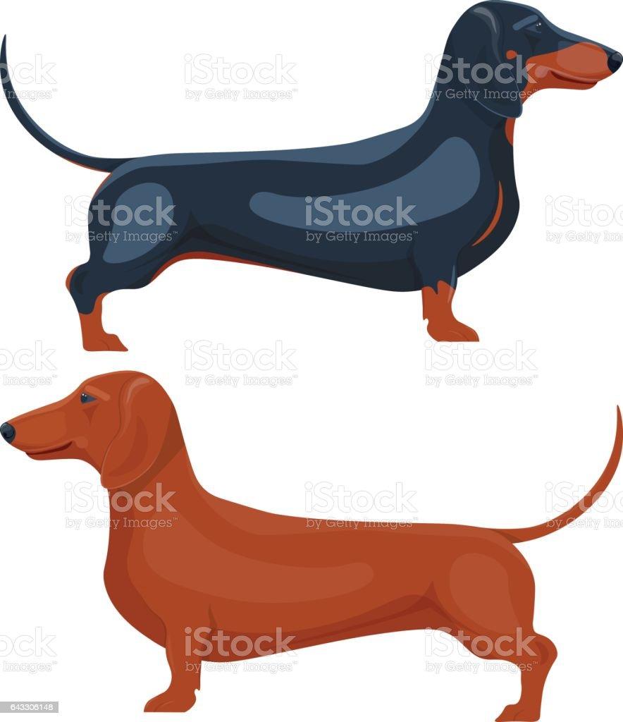 dachshund pet vector illustration isolated on white background vector art illustration