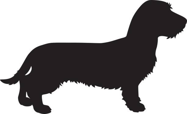 bildbanksillustrationer, clip art samt tecknat material och ikoner med tax vektor hund siluett - tax