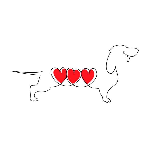 ilustraciones, imágenes clip art, dibujos animados e iconos de stock de perro salchicha con tres corazones. dachshund de la historieta en el amor. corazón de un perro. ilustración de vector de estilo plano. ilustración de vector dibujado aislado en blanco, insignia, diseño de la camiseta de la mano. - animales de granja