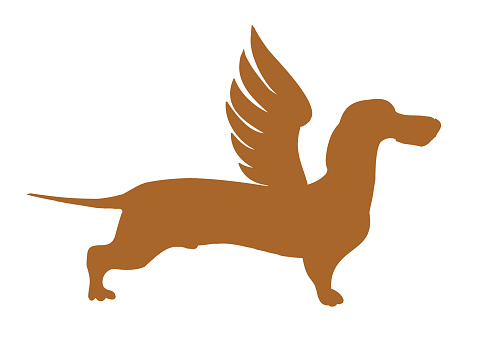 Dachshund with wings.