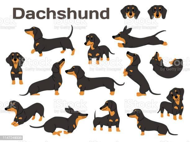 Dachshunddog in actionhappy dog vector id1147249335?b=1&k=6&m=1147249335&s=612x612&h=cvqgqpmersm9sj9idkhn0q ypmhalh6irnq0x9u0urw=