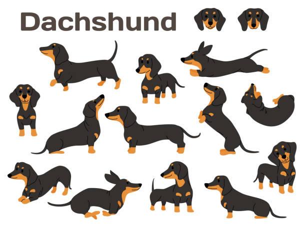 bildbanksillustrationer, clip art samt tecknat material och ikoner med tax, hund i aktion, lycklig hund - tax