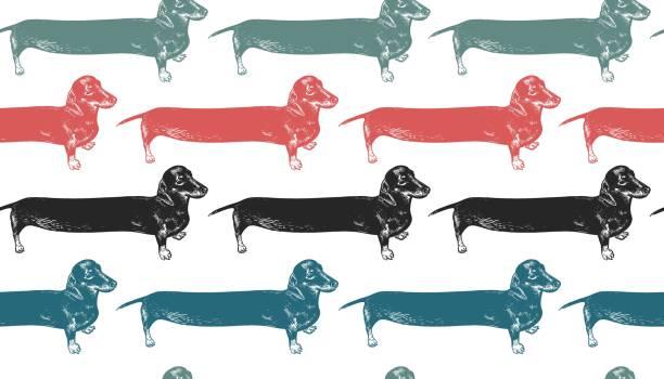 bildbanksillustrationer, clip art samt tecknat material och ikoner med dachshunds lång hundar. seamless mönster. - tax