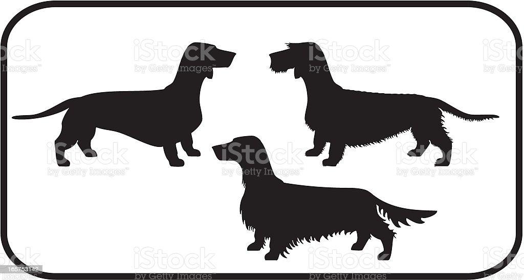 Dachshunds Set The three coat types vector art illustration