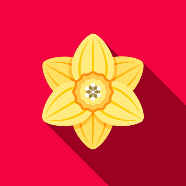 Daffodil Flat Design Gardening Icon with Side Shadow A colored flat design gardening supplies icon with a long side shadow. Color swatches are global so it's easy to edit and change the colors. daffodil stock illustrations