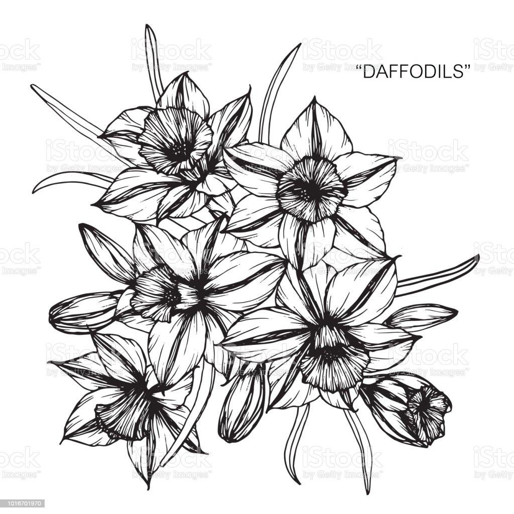 Jonquille Fleur Dessin Illustration Noir Et Blanc Avec