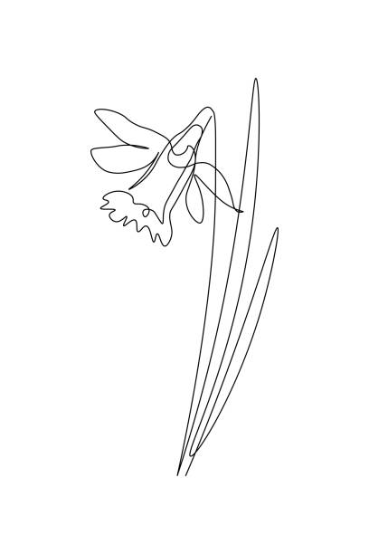 Daffodil flower Narcissus flower in continuous line drawing style. Black line sketch on white background. Vector illustration daffodil stock illustrations