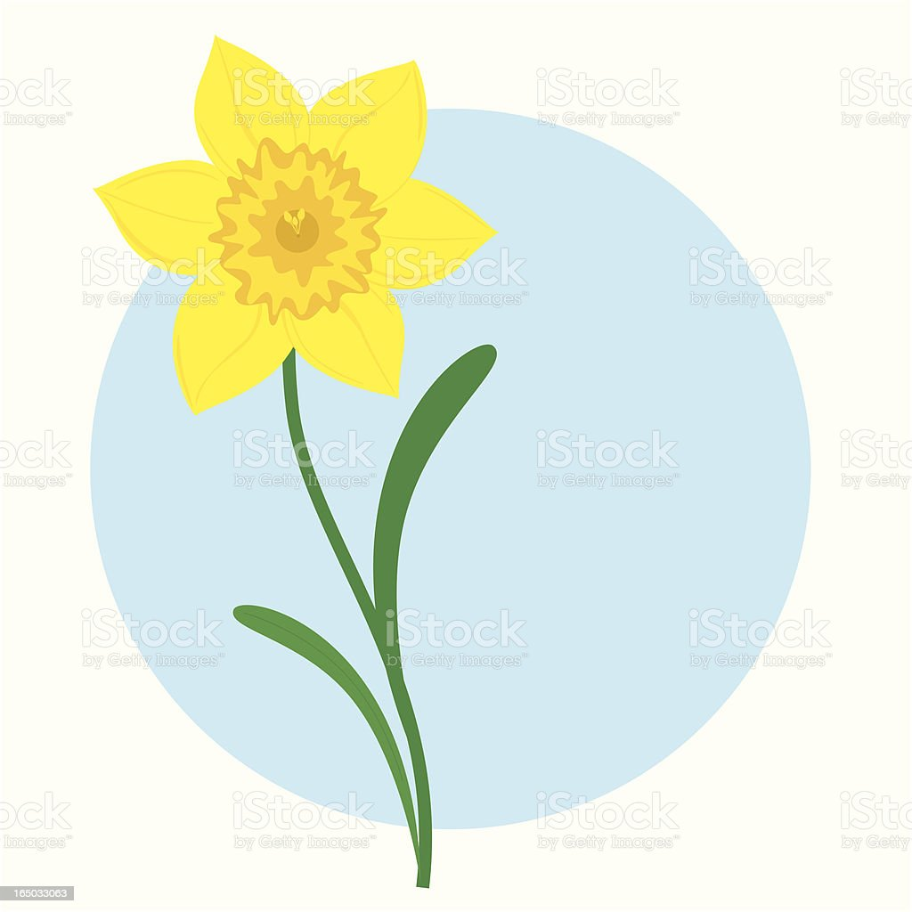 royalty free daffodil clip art vector images illustrations istock rh istockphoto com daffodil clipart border daffodil day clipart