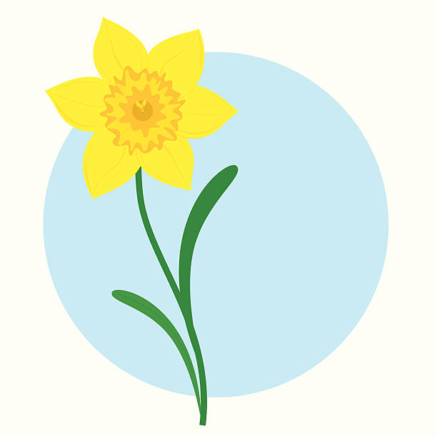 Daffodil  - incl. jpeg Happy Spring, Easter or St David's Day! daffodil stock illustrations