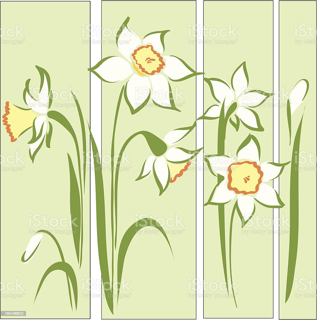 Daffodil royalty-free daffodil stock vector art & more images of beauty