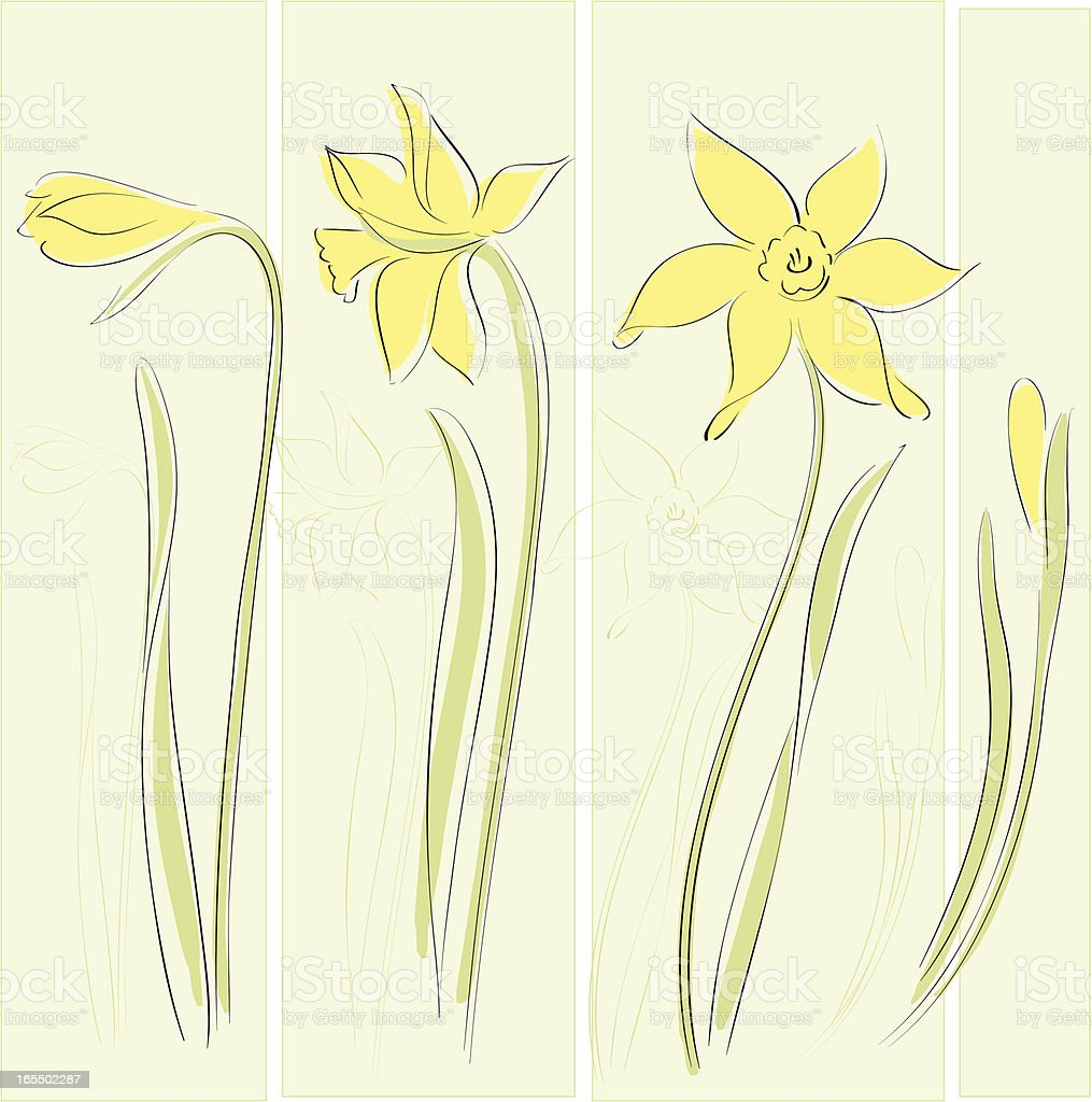 Daffodil royalty-free daffodil stock vector art & more images of daffodil